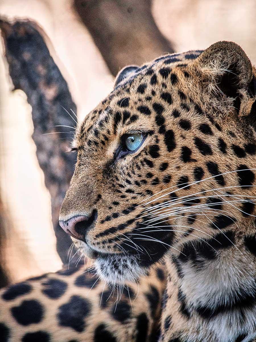 Ecco - WEB - (Pantanal) uriel-soberanes-iSUccs7RhsM-unsplash