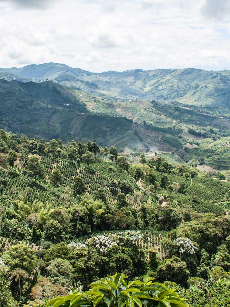 Ecco travels - Colombia - coffee region