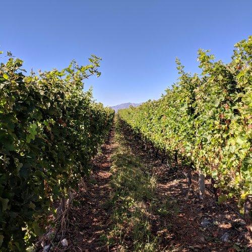 travel to mendoza vineyards