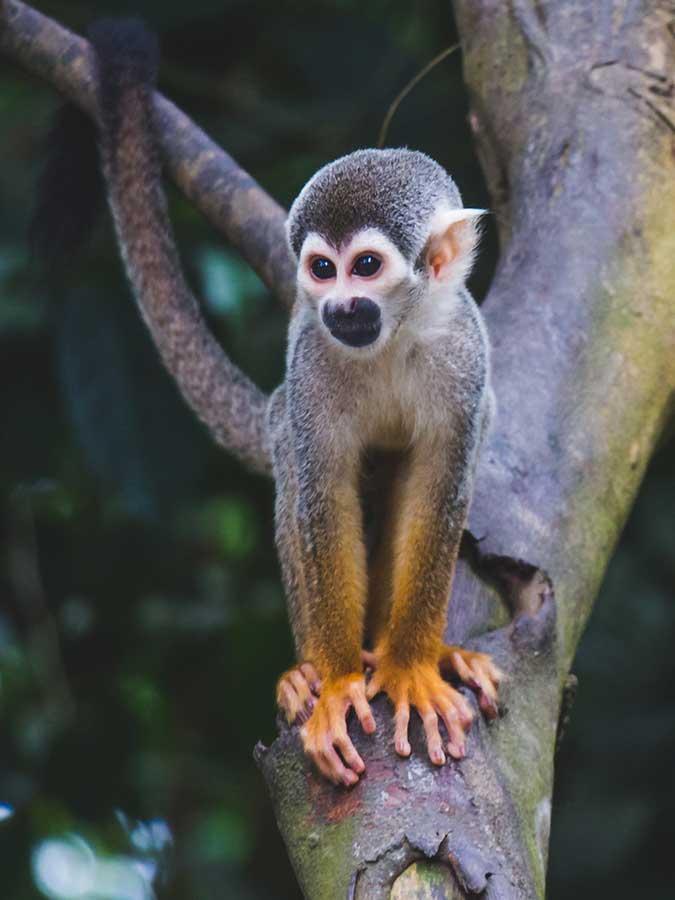Peruvian Amazon | Ecco Travels